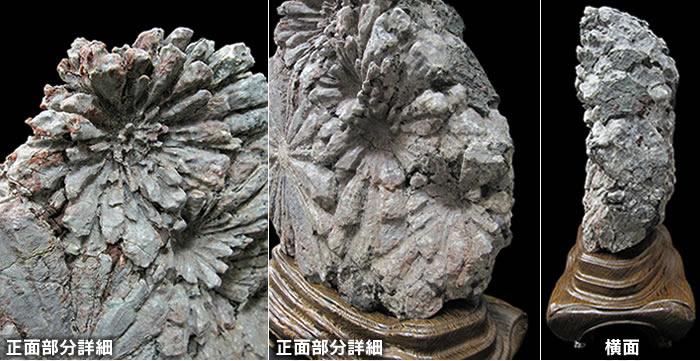 根尾谷菊花石